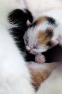 newborn kitten sleeping