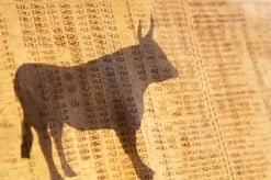 bull shadow on newspaper